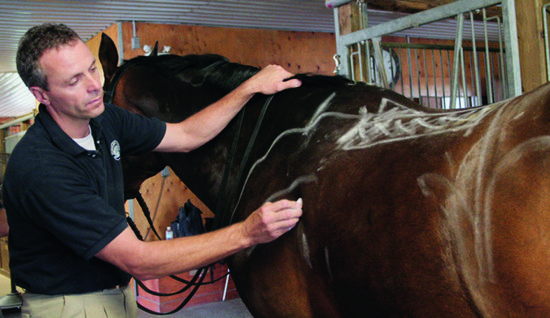 Jochen drawing important reference marks on horse - Website use only
