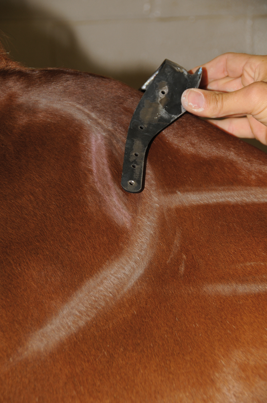This photo shows a gullet plate with forward-facing tree points, which impacts the shoulder cartilage even if the saddle is positioned correctly behind the shoulder blade.