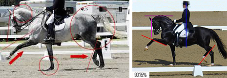 Incorrect movements in Dressage: 'Show Trot' with exaggerated movement in front and lack of engagement from behind.