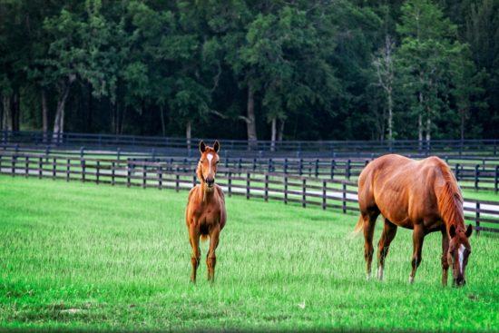 GoldMark Farm - Mare-Foal