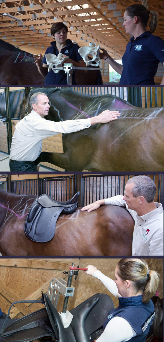 Saddle Fitting Demos - Collage