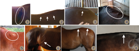 Damage caused by ill-fitting saddles