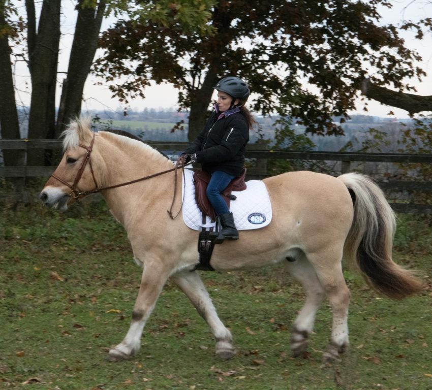Bonita Dressage saddle