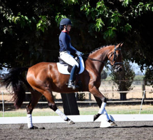 Photo by Tamara courtesy of Christiane Noelting Dressage Centre, CA.