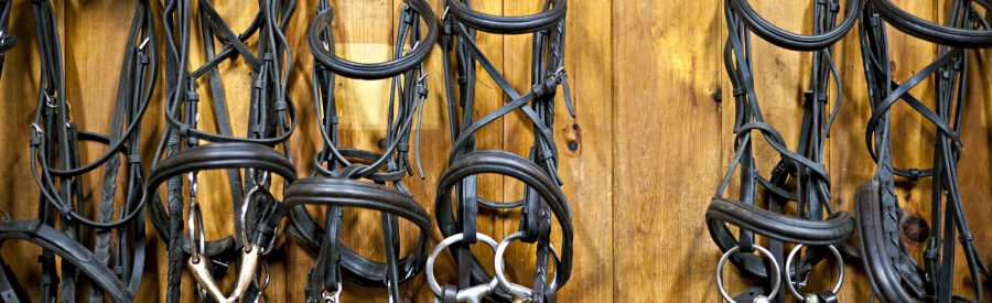 Bridles Hanging in Tack Room - 123RF 14384579_l